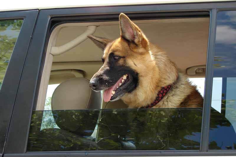 achat housse de siege pour chien pour auto