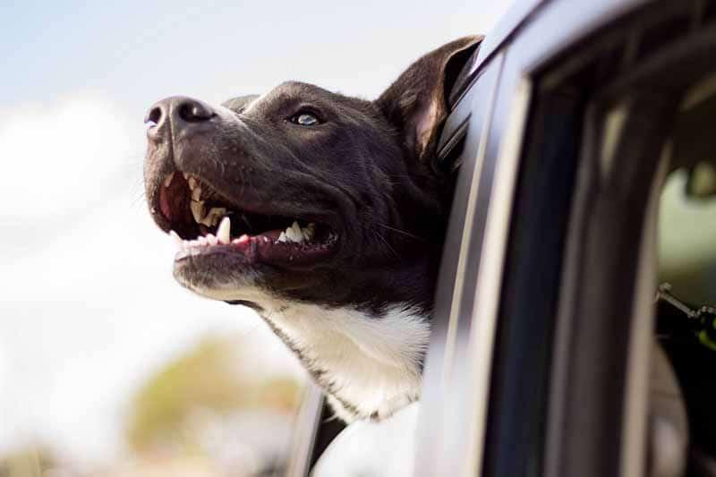 comparatif housse de siege pour chien pour auto