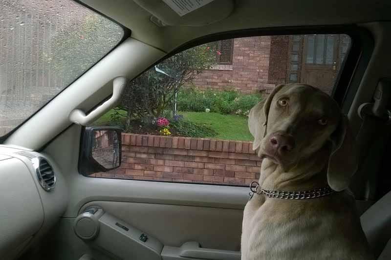 housse de siege pour chien pour auto pas cher