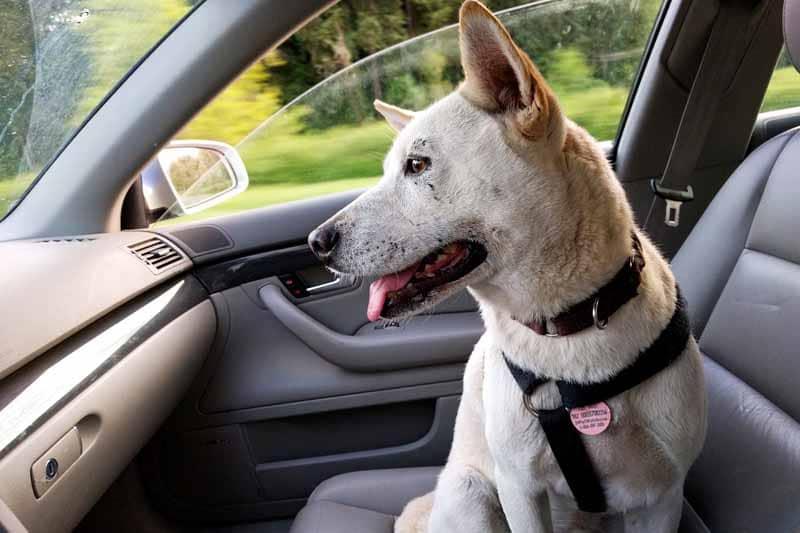 test housse de siege pour chien pour auto