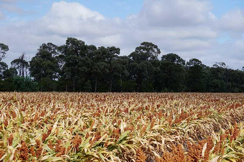 avantages inconvenients ethanol